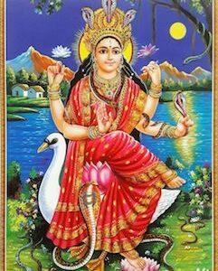 Sri Manasa Devi Stotram